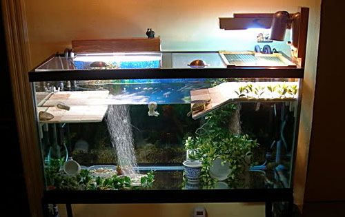 How to Create the Perfect Freshwater Aquarium?
